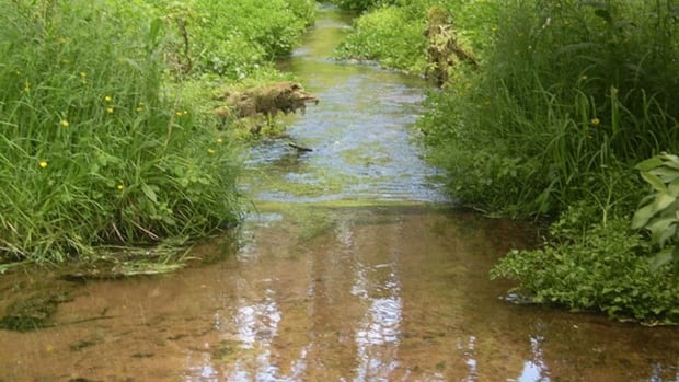 The reduction of runoff from Cape Breton Road has led to improvement of the habitat in Clarks Creek and the return of salmon.