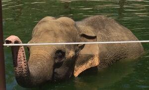 Calgary-elephants