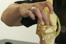 ACL in knee joint