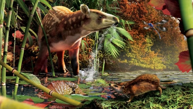 In a reconstruction of the early Eocene (52 million years ago) in northern British Columbia, a tapir-like creature from the genus heptodon drinks in the shallows, while a small proto-hedgehog stalks prey in the foreground.