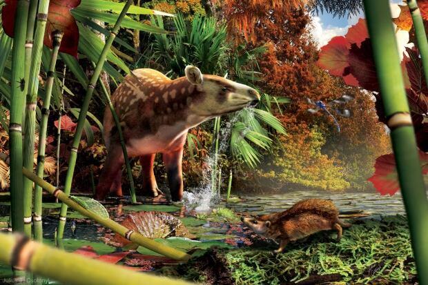 Early tapir and hedgehog