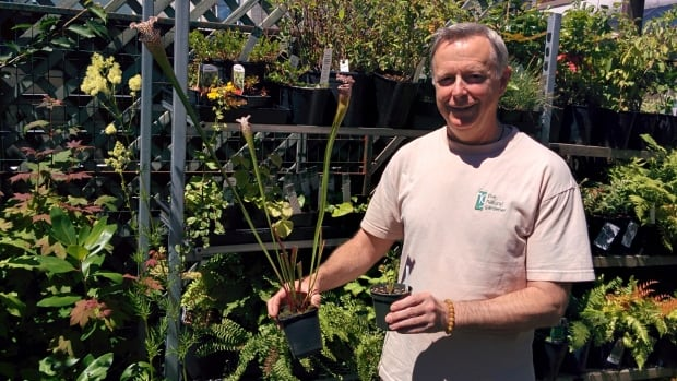 Gardener Bob Tuckey says carnivorous plants are a natural and effective way to get rid of fruit flies.