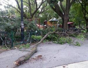 Parc De Lorimier fallen tree branch