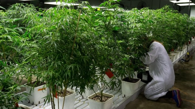 Under new Marijuana for Medical Purposes regulations, Canadians can no longer be licensed growers on their own. Instead, they have to go to licensed commercial producers. A new centre that aims to help people understand the new regulations opens in Hamilton next week.