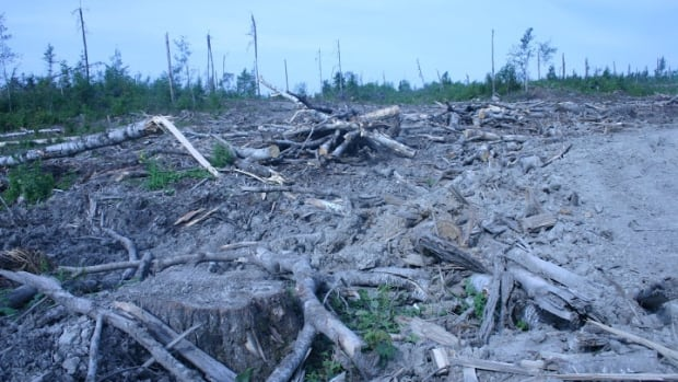 Ontario's environment ministry ruled last week that there is no need for additional assessment of the connection between logging and mercury in the environment.