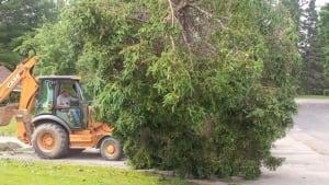 Kings Landing fallen trees