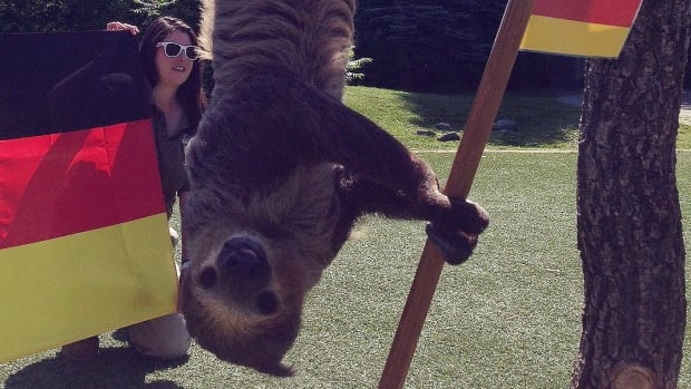 Bob the two-toed sloth predicted July 11, 2014 at the Toronto Zoo that Germany would win the championship match against Argentina on Sunday. Here's a look at animals that are choosing this year's World Cup winners.