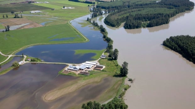 Flood waters from the Fraser River surround a farm in Chilliwack, B.C. Thursday, June 28, 2012. THE CANADIAN PRESS/Jonathan Hayward