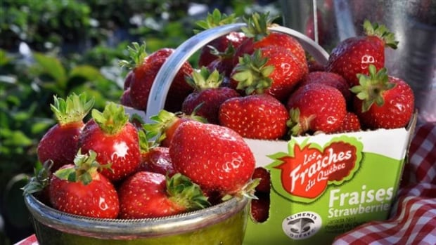 Some Quebec strawberry farmers are having a horrible summer thanks to a combination of viruses that have left fields all over southern Quebec nearly barren.