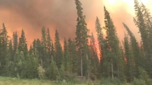 forest fire file