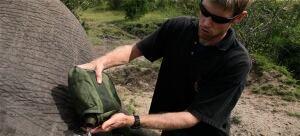 Jake Wall elephant app