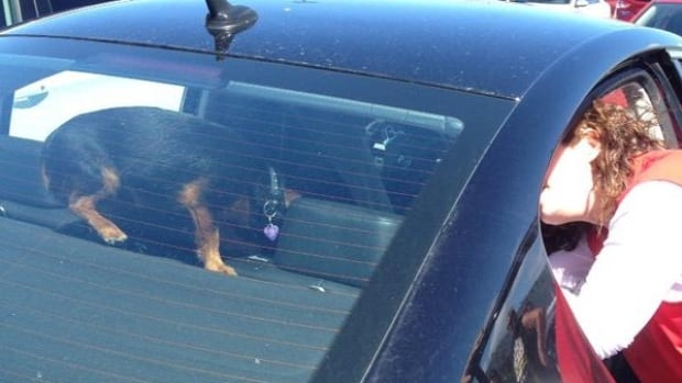 A dog was rescued from a hot car parked at Costco.