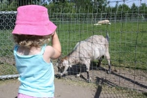 Family Day at Saskatoon Zoo