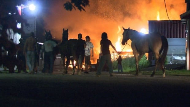 Five horses managed to escape after their stable caught fire Saturday night.