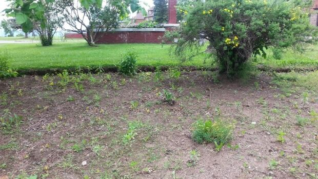 Some Thunder Bay public gardens are looking rather barren as city crews are behind on their planting schedule.