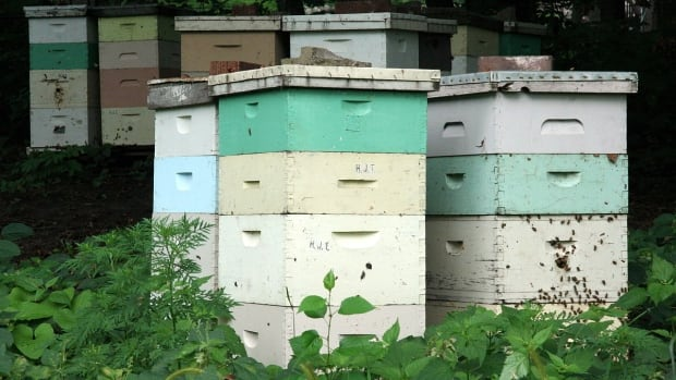 A beehive full can be home to thousands of bees and weigh more than 100 kilograms when filled with honey.
