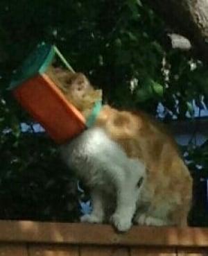 Cat with head in bird feeder
