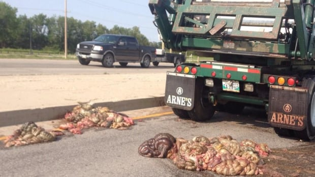 A dump truck carrying a load of guts lost its load Wednesday evening near St Mary's Road on the Perimtre Highway.