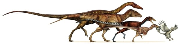 Dinosaurs evolve into birds