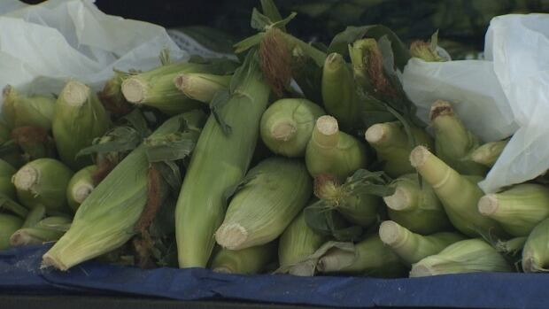 Taber corn is available on roadsides around Calgary but growers say buyers need to be cautious that what they're getting is the real deal.