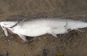 Iqaluit fish net