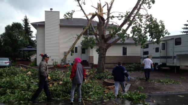 Al Trainor's yard used to be lined by large, decades-old poplar trees in White City. Not anymore.