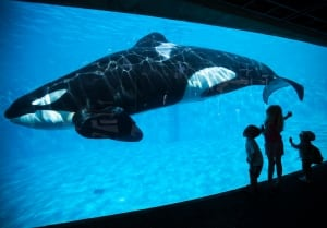 SeaWorld Orca shows to end San Diego Shamu Satadium