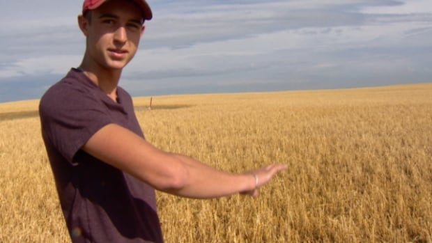 Curtis Groeneveld points out the damaged wheat field at his family farm near Blackie, Alta.
