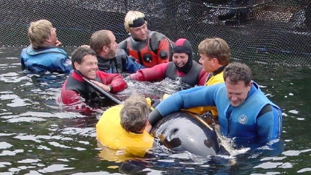 Springer the orphaned killer whale in 2002