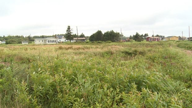 The province argues the lot next to the Inderwicks has turned into a wetland.