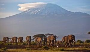 Africa Elephant Slaughter