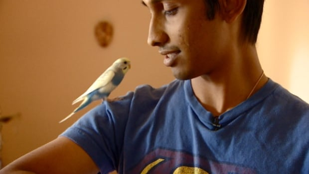 Adi Chaudhuri posted a Kijiji ad on August 13 in the hopes that someone would return his budgie Perry.