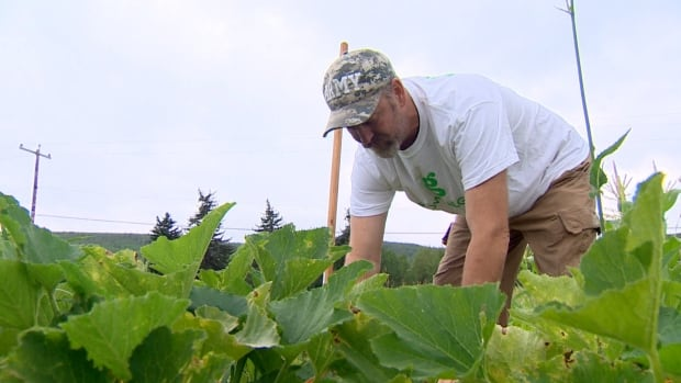 Grow Calgary wants to expand its urban garden along Calgary's utility corridor so that more produce can be donated to the food bank. It hopes to one day be the biggest urban garden in the world.