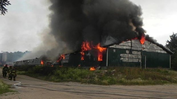 1,100 pigs were killed in this hog barn fire in rural Manitoba Thursday evening. RCMP are investigating.