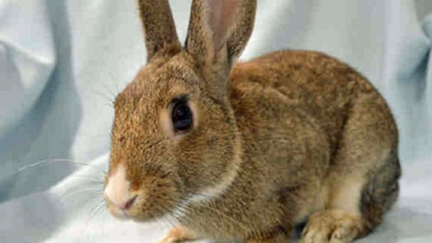 This bunny could be yours. Until next Saturday, the city will waive the usual $40 fee to adopt a rabbit.