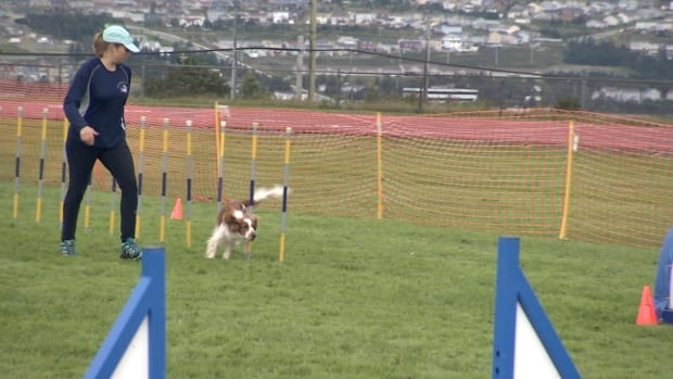 The Newfoundland Athletic Dog Association is holding a nationally-sanctioned agility trial this weekend in Mount Pearl.