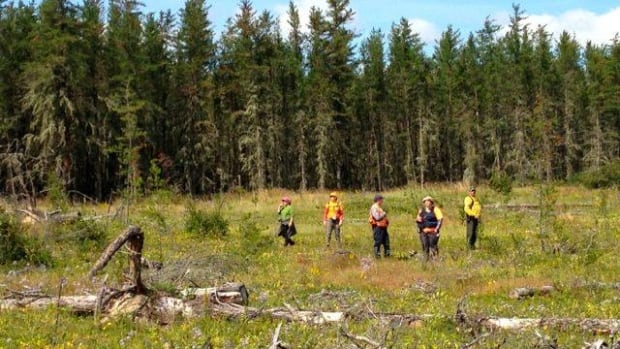 Searchers spent Saturday and Sunday looking for an elderly woman who had gone missing after picking berries.