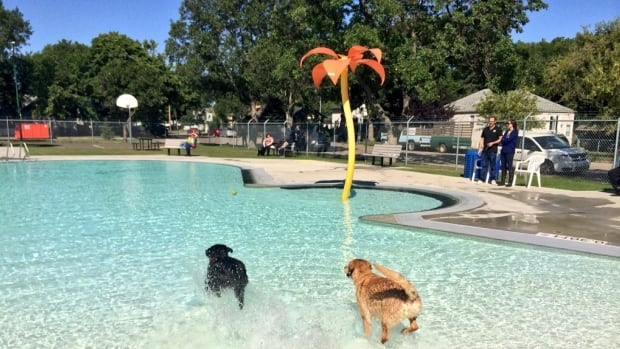 Woof Splash Regina Plans End Of Summer Pool Party For Dogs Saskatchewan Cbc News