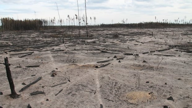 The aftermath of a fire near Sandy Lake in Wood Buffalo National Park, at a site which also burned 10 years ago. Hunters in Gameti, N.W.T. are also finding devastation in places where they normally hunt caribou.
