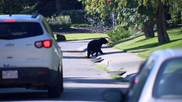 A black bear was spotted wandering around southwest Calgary in and around North Glenmore Park on Wednesday.