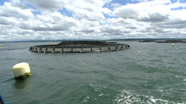 Under the new regulations, fish farms like this one require the immediate reporting of unusual fish kills.