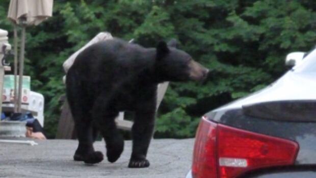 Maria Bozzo suggests using online maps that track bear-sighting calls in the area as a way or keep people safe.