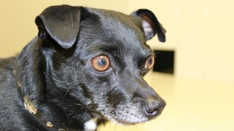 Woman who abused Chihuahua gets 60-day jail sentence