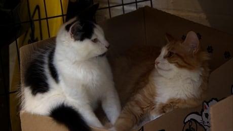 Stray cats at the BC SPCA