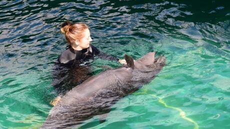 Chester - Vancouver Aquarium's rescued false killer whale - Aug. 28, 2014
