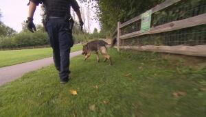 RCMP K9 unit at Robson Park after sexual assault of 9-year-old