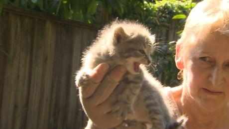 Marlene Dunbrack, a volunteer cat trapper with VOKRA - Aug. 2014
