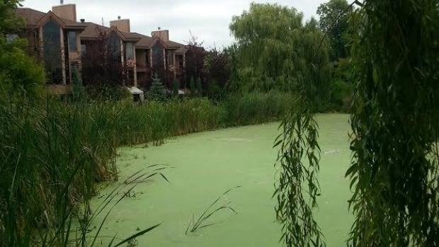 Residents who border the basin have been complaining of the smell and pollution for years.