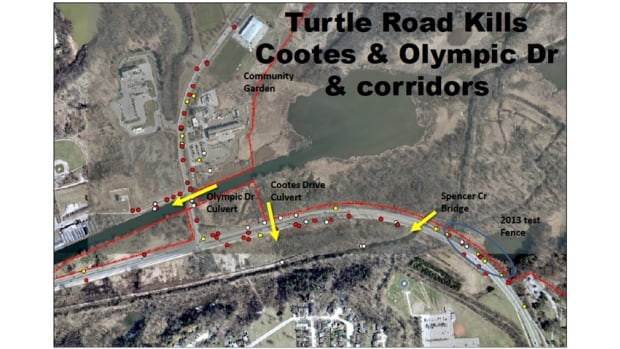 This map shows where turtles have been spotted from 2009 to 2012. The red dots indicate a turtle dead or injured by a car. Royal Botanical Gardens is asking the city to lower the speed limit on Cootes Drive, among other measures, to protect the city's rare turtles.