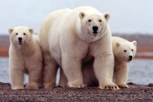 OIL-ARCTIC/WWF